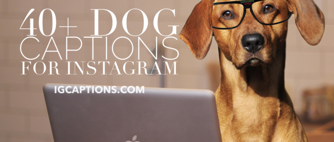 40 Dog Captions for Instagram