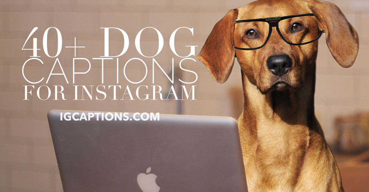 40 Dog Captions for Instagram Dog Lovers on Instagram